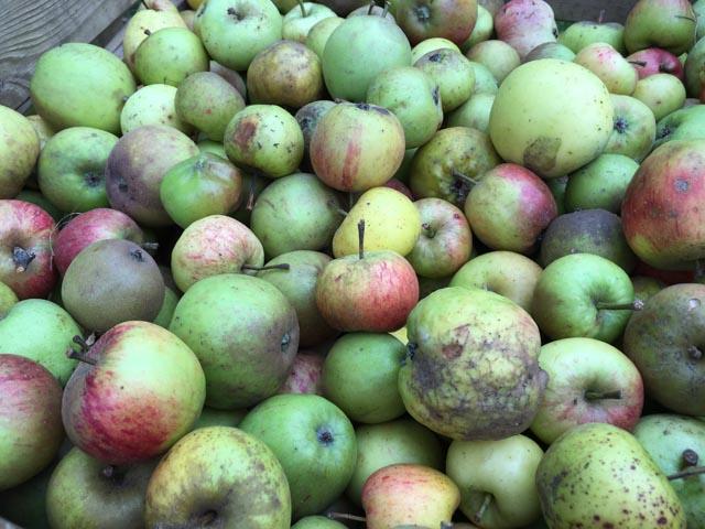Apple Days at Hughenden
